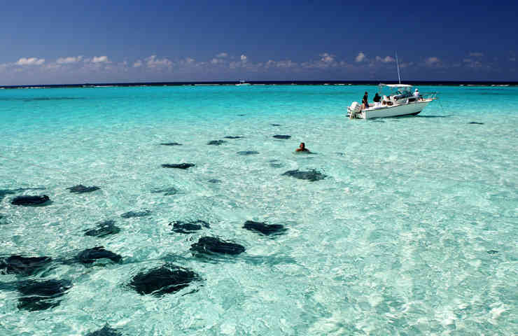 stingray city 6 DESTAQUE